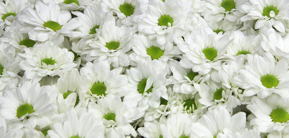 Fertilizantes y fitosanitarios