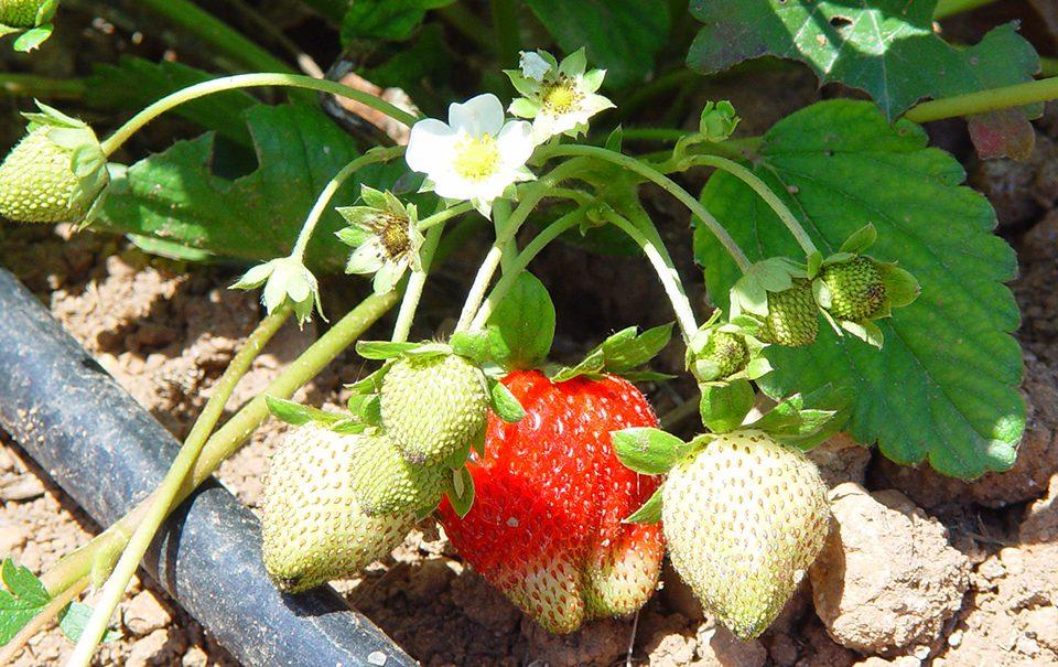 Legislacion fertilizantes