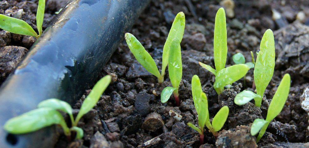 El mercado y la necesidad de los agronutrientes