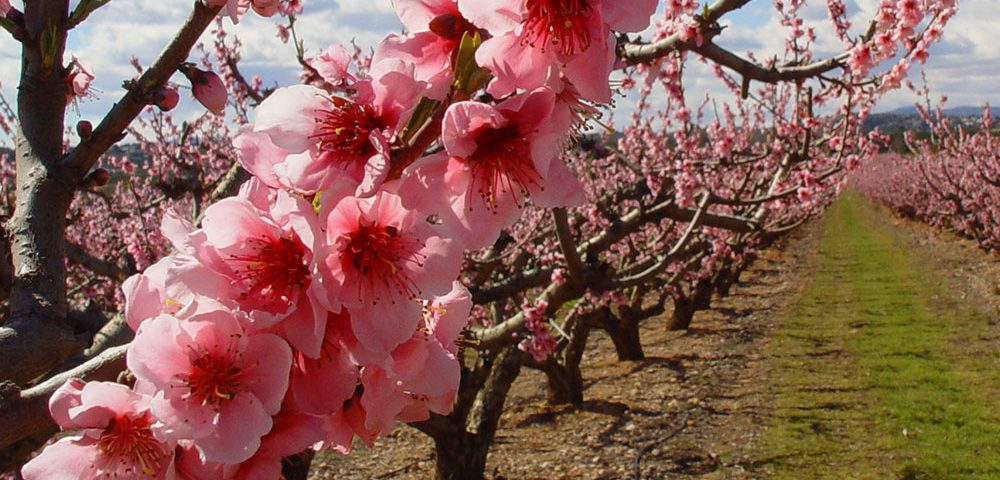 Agricultura ecológica en Baleares