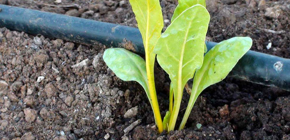 Agronutrientes | AEFA