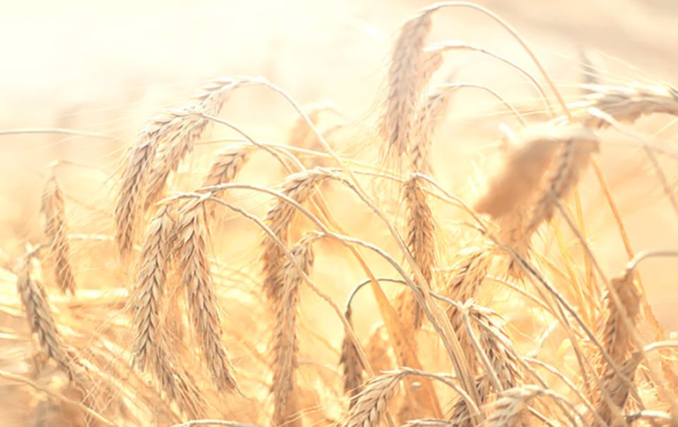 Agroquimicos y nutrientes