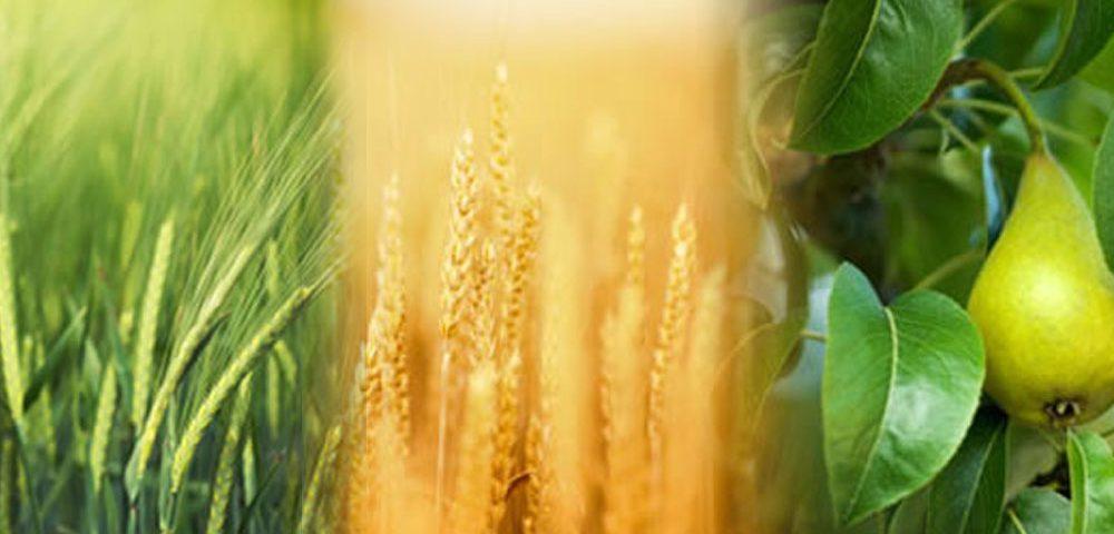 AgroStock