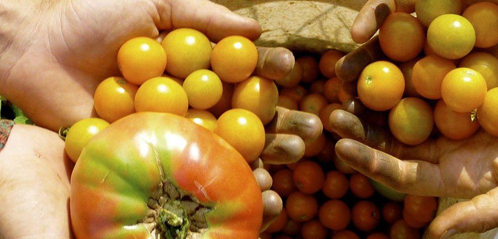 Agrotecnologías Naturales