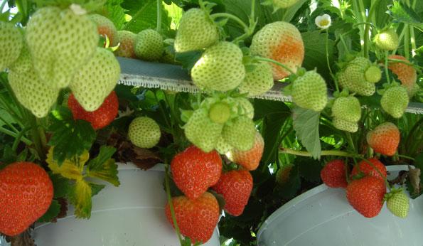 Alimentos para las plantas