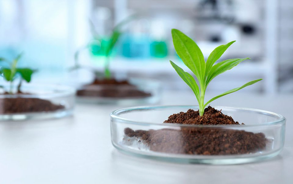Artal Smart Agriculture