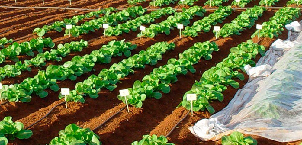 Bioestimulantes agricolas Aefa