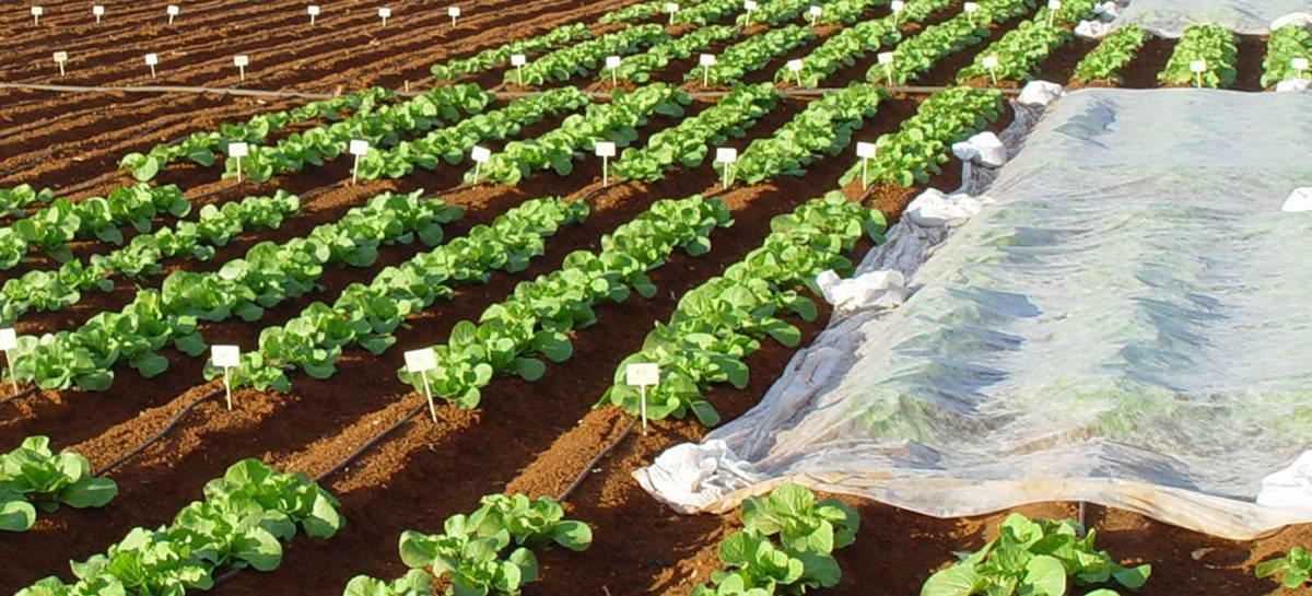 Bioestimulantes agrícolas | AEFA