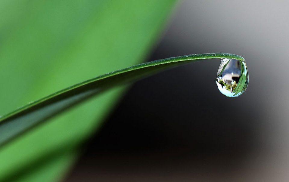 Mecanismos de acción de los bioestimulantes para la producción vegetal