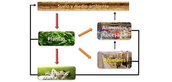 iclo de nutrientes incrementados en los programas de biofortificación