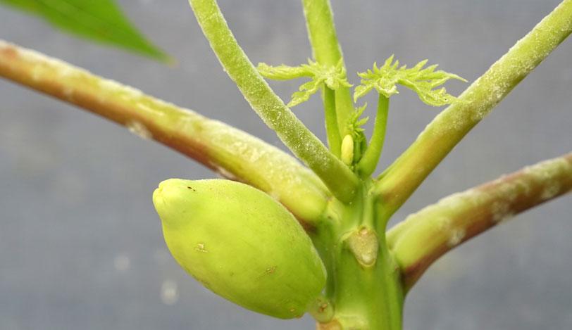 Agronutrición en cultivos menores