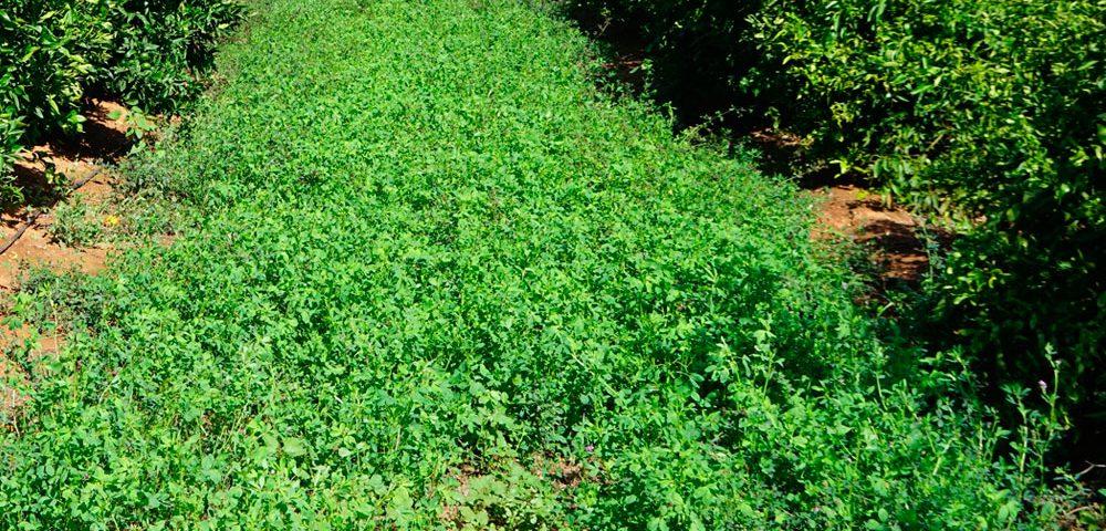 Cultivo de cítricos ecológicos
