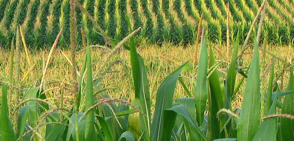 Jornada de fertilización de cultivos herbáceos