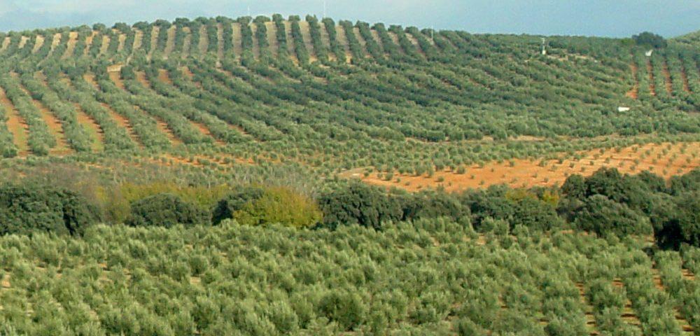 AEFA en una agricultura de futuro