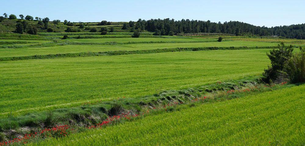 Fertilizantes que aumentan la producción sin riesgos