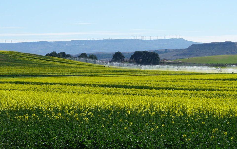 Los cultivos herbáceos y los bioestimulantes agrícolas