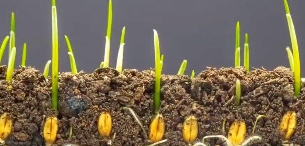 Curso de microorganismos aplicados a la agricultura