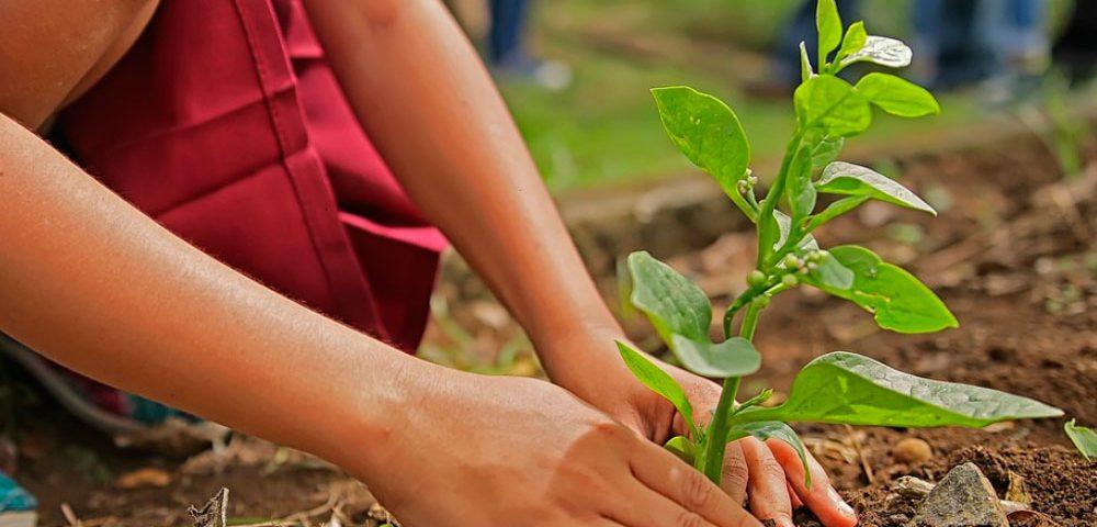 AEFA Día Mundial del Medio Ambiente