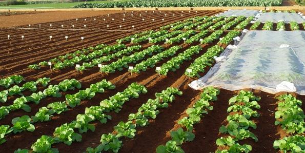 Propuesta de un nuevo Reglamento de Fertilizantes CE