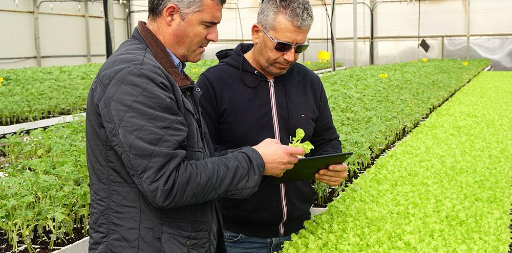 II Programa Experto en Agronutrientes y Bioestimulantes