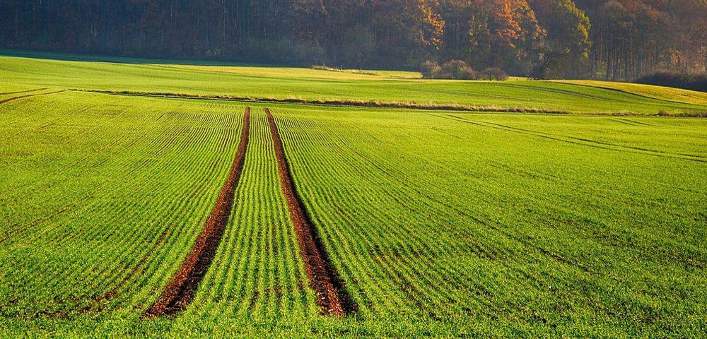 XLIV Foro INIA sobre Fertilización agraria