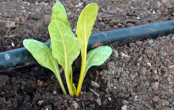 Elemento fertilizante