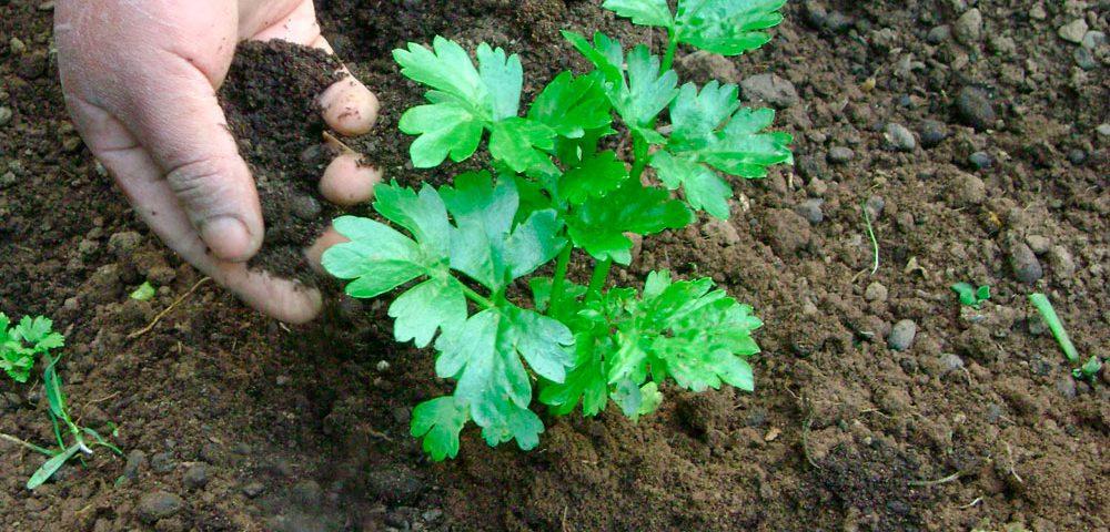 Fertilizantes ecológicos para hortalizas