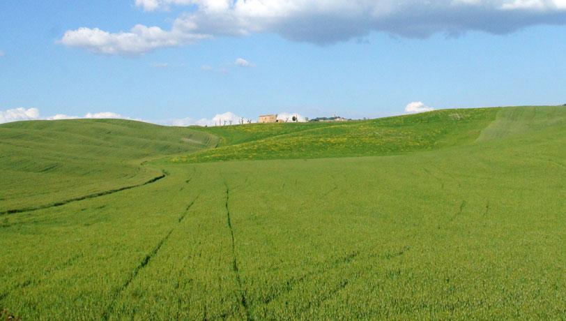 Fertilizantes para trigo