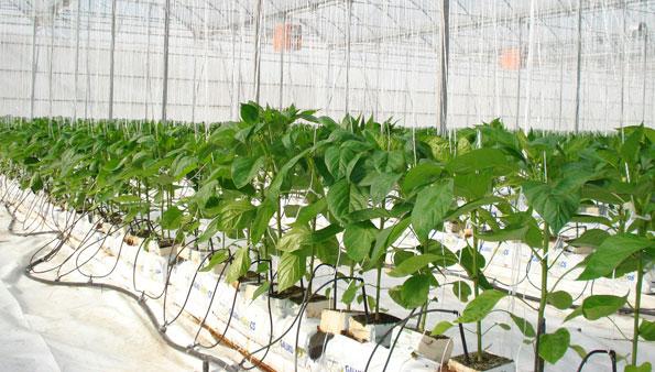 Los agronutrientes y bioestimulantes agrícolas