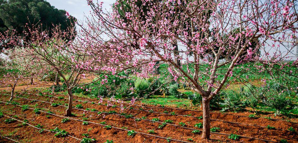 Frutales en cultivo bajo agricultura ecológica