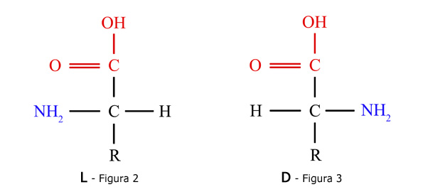 Grupos amino y ácido