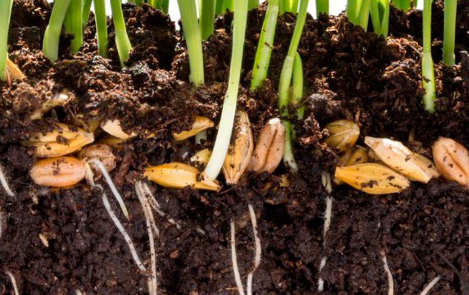 VIII Jornada de Fertilizantes y Bioestimulantes