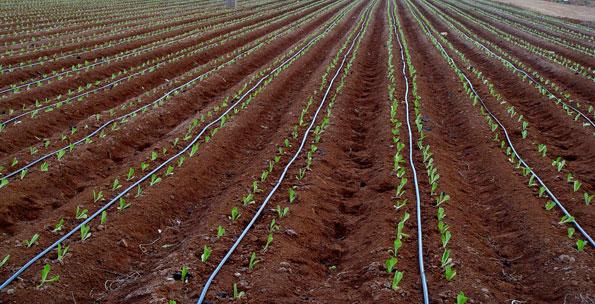 Fertilización con riego por goteo