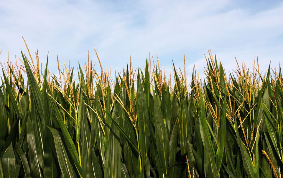 Los bioestimulantes entre los fertilizantes