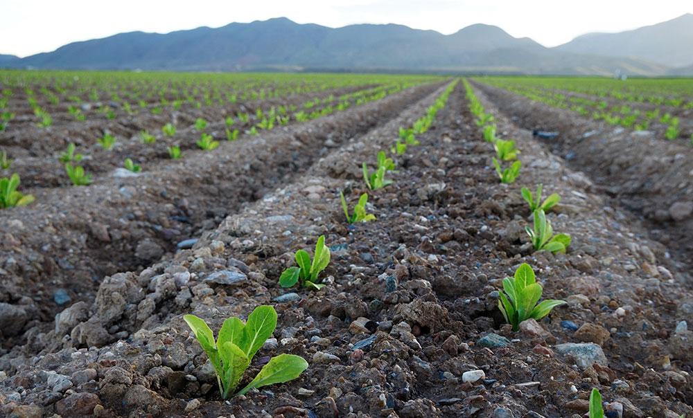 Microorganismos del suelo como bioestimulantes