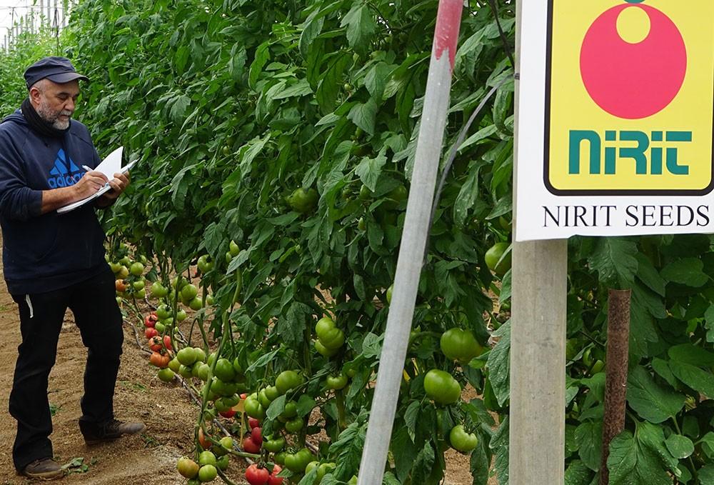 Nirit Seeds Ibérica