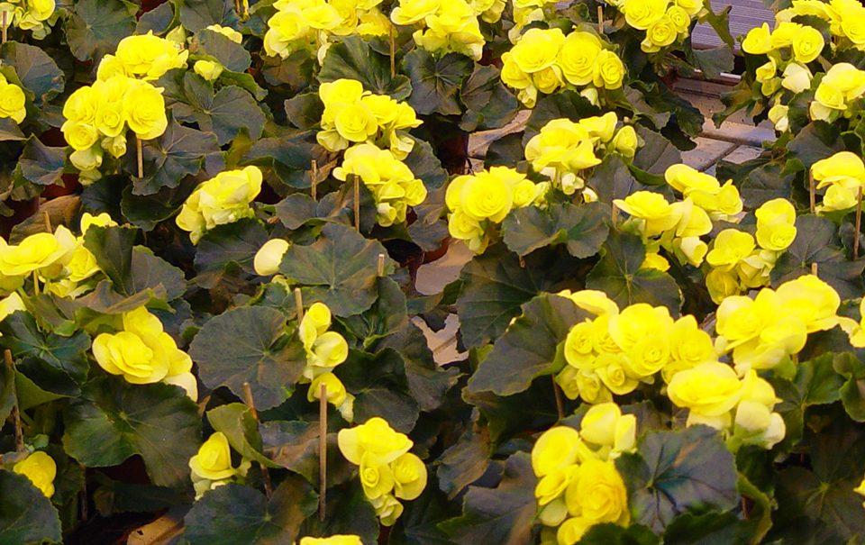 Jornada Horticultura