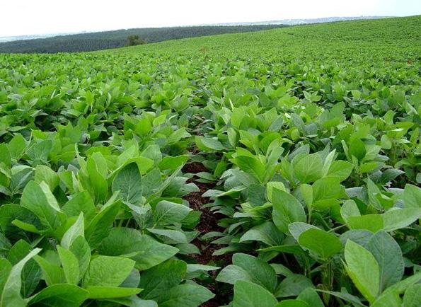 Fitofortificantes en cultivos menores
