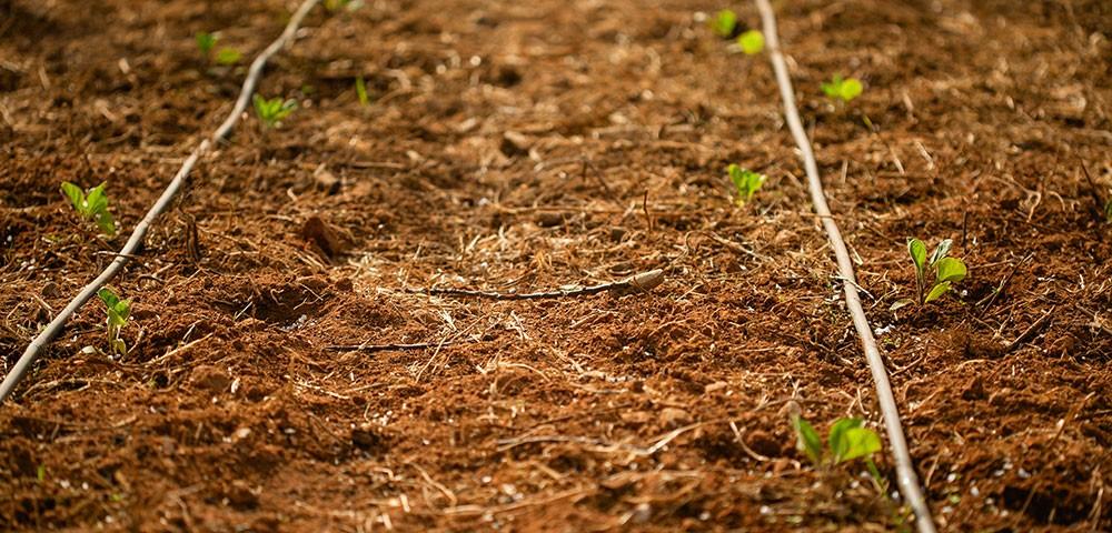 Riego en agricultura ecológica