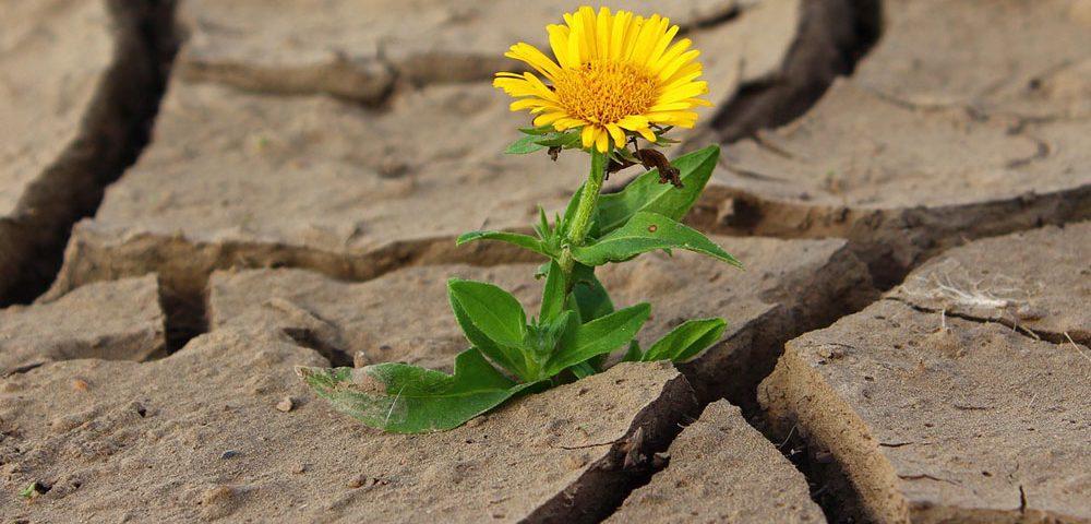 Los bioestimulantes agrícolas como una solución contra el estrés vegetal