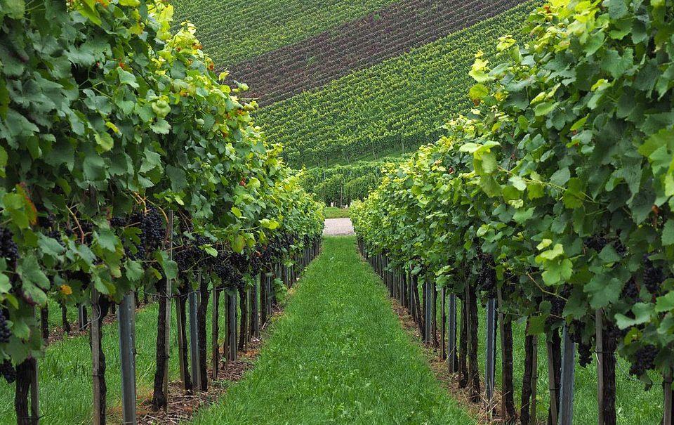 Jornada sobre la agrícola ante la nueva coyuntura europea