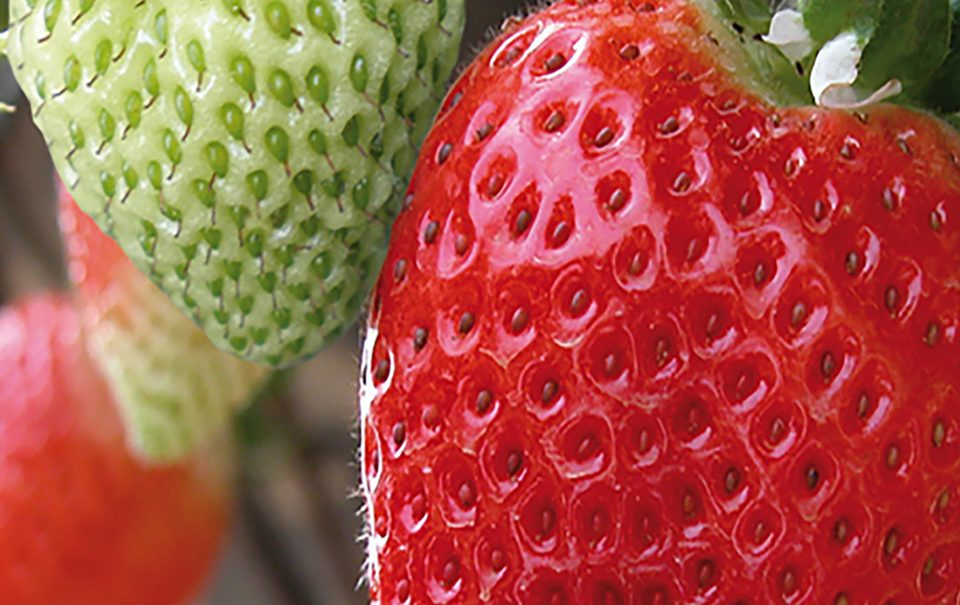 Sostenibilidad agro