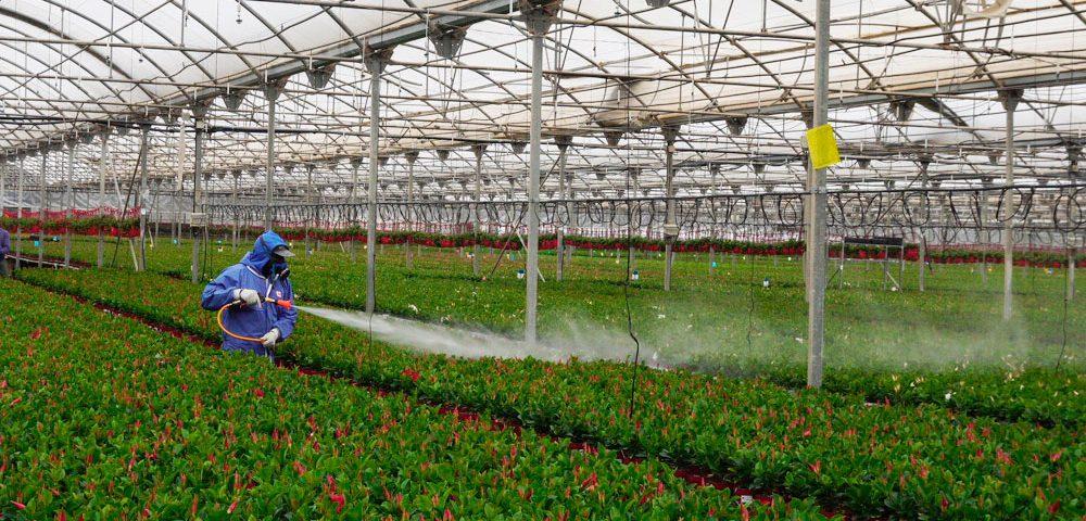 Tratamiento fitosanitario en ornamentales