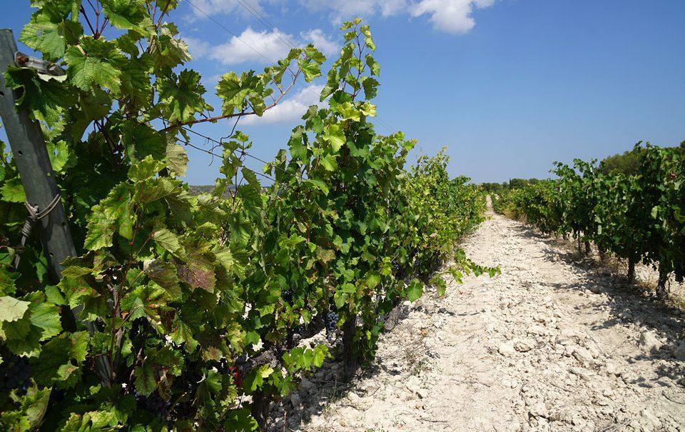 Internacionalización de los bioestimulantes y agronutrientes