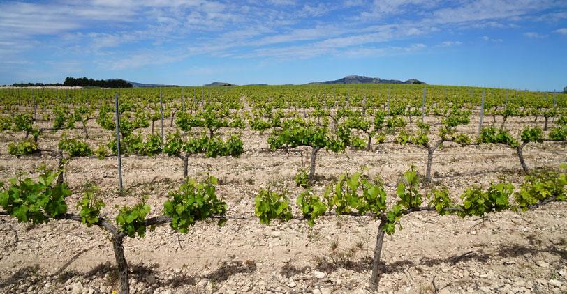 Importancia de la huella isotópica en fertilizantes nitrogenados ecológicos