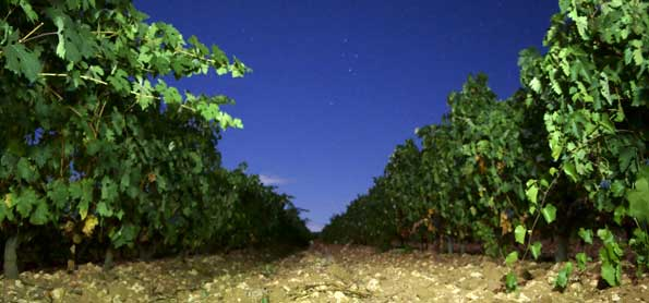 Las plantas de viña son sensibles a la carencia de Magnesio